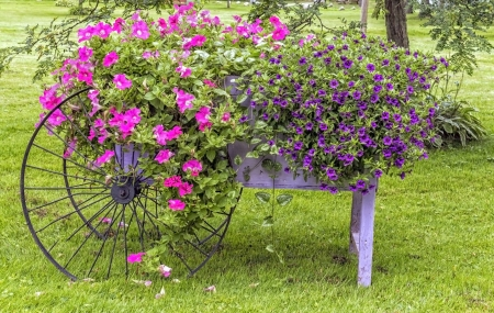 Pink and purple flowers grow out of a vintage wheelbarrow Stock Photo