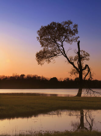 Pink and orange tones of sunset over a pond with an odd tree silhouette   Stock Photo