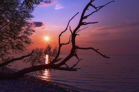 Crooked tree branch hangs over the beach as the sun sets a beautiful pink and purple glow.