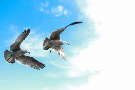 unison: Two seagulls flying in unison. Stock Photo