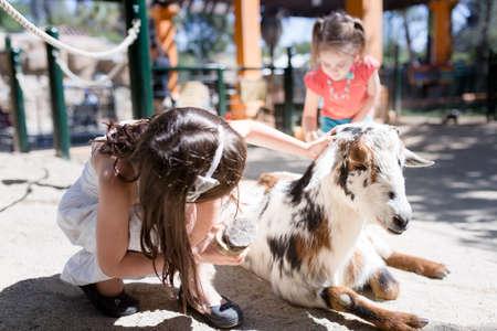 Mädchen pflegt eine Ziege mit einem Pinsel in einem Streichelzoo.