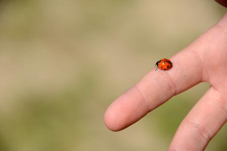 Ladybag auf einen Finger.Lucky Charme Insekt unter der Sonne
