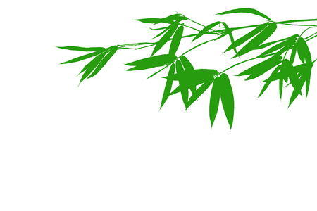 Horizontal green color bamboo branch with leaf isolated on white background for graphic resource,overlay Stock Photo
