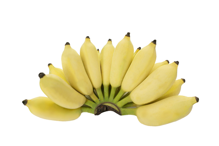 Isolated bunch of cultivated banana in white background with clipping path