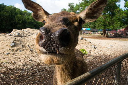 guess: deer guess zoo nose