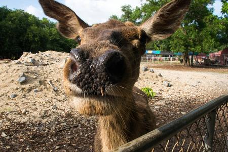 deer guess zoo nose