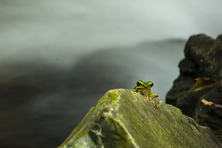 Green frog on the rock space