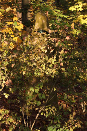 Camouflage KZS Stock fotó