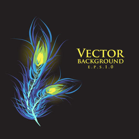 Vector two feathers peacock with black background. Ilustração