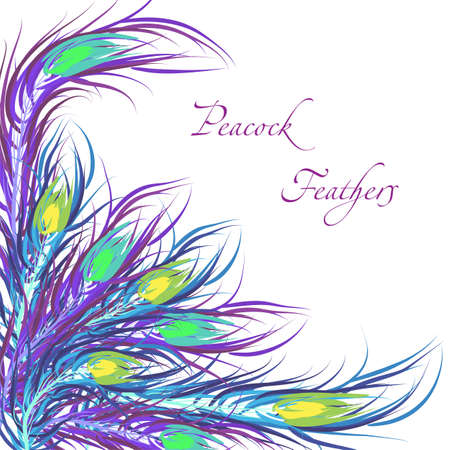 Vector feathers peacock with color background. Fashionable design eps10. 向量圖像