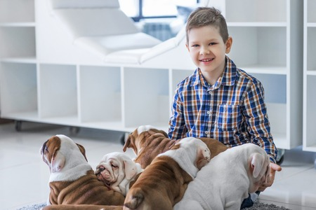 Cute boy sitting on the floor with the puppies English bulldog Stock Photo