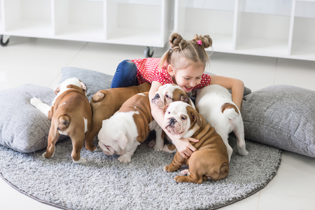 Little girl sitting on the floor and takes care of the puppies bulldog 스톡 콘텐츠