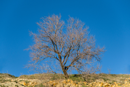 Branches of a tree against blue sky