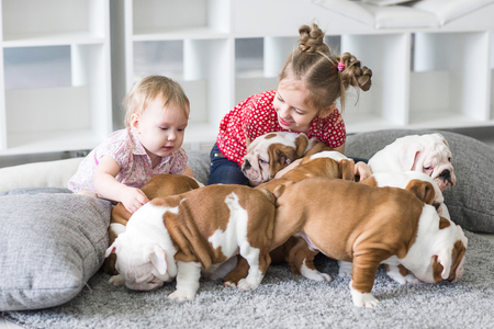 cute girl sitting on carpet and playing with puppies bulldog
