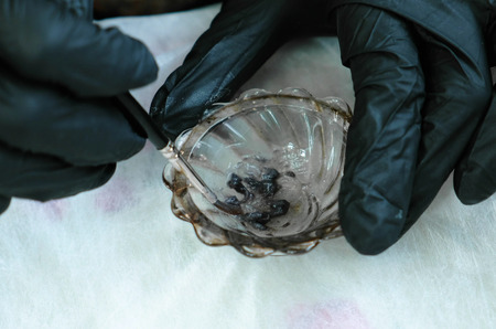 Beauticians hands in gloves mix the paint in a bowl with a brush. 스톡 콘텐츠