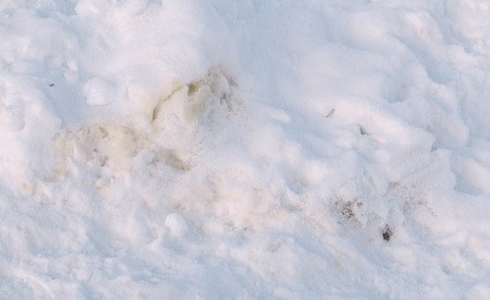 Excrement of Pets in the snow in the winter Park.