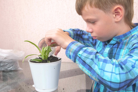 Plant care concept. Boy is planting houseplant and watering it.
