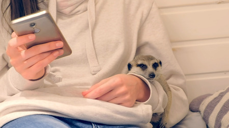 Woman types a message on phone sitting in kids play house hugging meerkat. Unrecognizable.