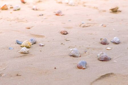 Sandy beach with shells and a conch shell