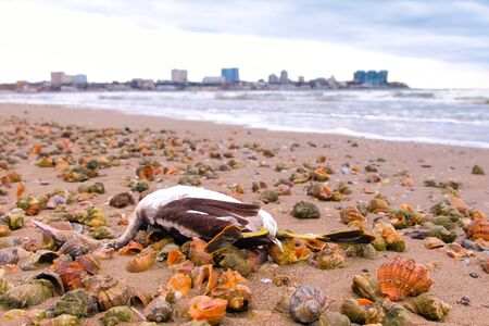 Death of animals and birds, environmental disaster at sea. Stok Fotoğraf