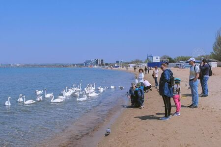 Anapa, Russia, 26-04-2019: People tourists feed white swans and pigeons at sea on sand beach. Spring in resort coastal town. Editorial video. Tourist traveller travel journey seashore sand beach.