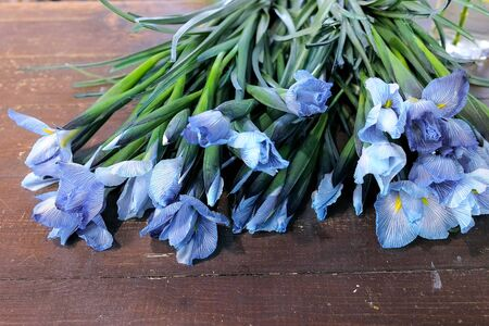 Floral business concept. Blue tender iris flowers with long stems on dark wooden table in flower shop. Creates professional bunch in floristic studio store.