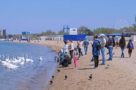 Anapa, Russia, 26-04-2019: People feed white swans and pigeons at sea on sand beach. Spring in resort coastal town. Editorial video. Tourist traveller travel journey seashore sand beach.