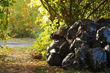 Concept of seasonal cleaning in public areas in the city. Many black garbage bags with trash in autumn park near the trees. Rubbish is prepared for removal by city services.