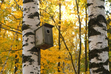 Concept of caring for birds and animals in the cold season. Wooden birdhouse for the birds on the steam of birch in city park, closeup view, camera in motion.