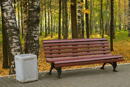 All the ground is covering with yellow leaves, foliage. Wooden bench in autumn city park among birches near asphalt path. The trash can is near the bench. Beautiful nature in fall season. Stok Fotoğraf