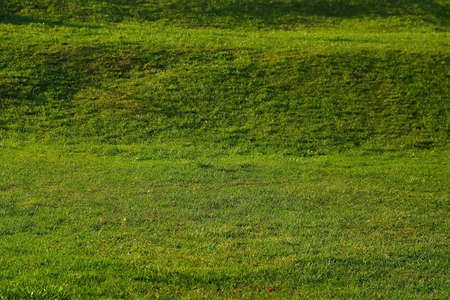 Background with green juicy grass, closeup view. Bright green field, lawn with cut even grass and small hills.
