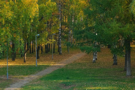 Beautiful view on autumn park with green and yellow leaves and asphalt paths in the city. Falling yellow dry leaves are covering green grass and ground. Birches, mountain ash and pines in the sun. 免版税图像