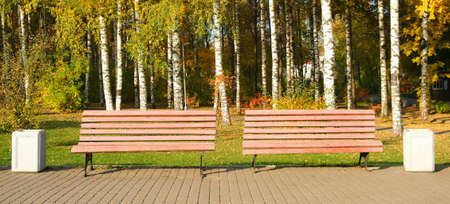 Ground is covering with yellow leaves, foliage. Two Wooden benches in autumn city park among birches near asphalt path. The trash cans is near the bench. Beautiful nature in fall season. 免版税图像
