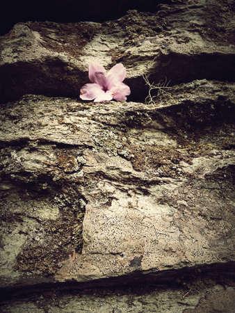 Subtle flower caught in the rocks.
