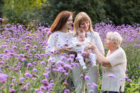 grandmother: Great-grandmother, grandmother, mother holding a baby in a beautiful lavender field  Stock Photo