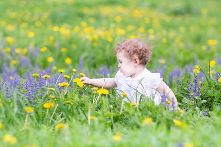 first day: Cute baby girl playing with dandelions in a park
