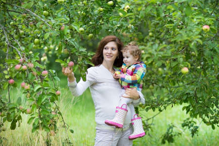 Young pregnant mother and her little baby daughter picking apples in a fruit garden on a cold and rainy autumn day  photo