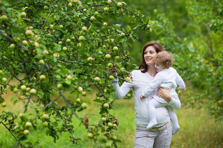 Beautiful young pregnant woman and her laughing baby daughter picking apples in a garden in autumn  photo