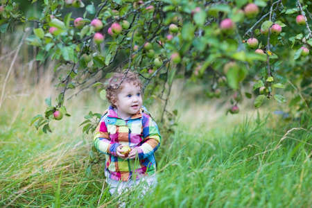 Funny baby girl walking in an apple garden on a cold rainy day in autumn  photo