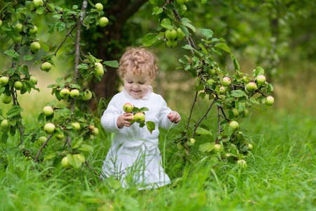Adorable baby girl eating apples in the fruit garden under an apple tree wearing a festive white dress  photo