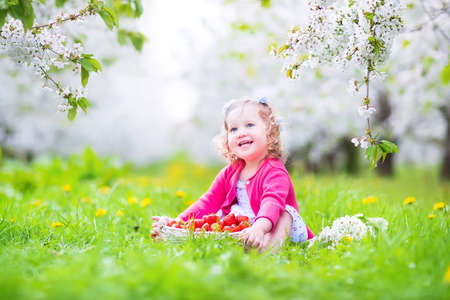 strawberry tree: Cute happy toddler girl with curly hair and flower crown wearing a red dress enjoying picnic in a beautiful blooming fruit garden with white blossoms on apple trees eating strawberry for healthy snack