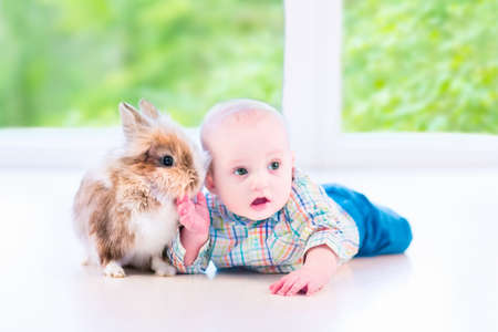farm girl: Adorable little baby playing with a funny real bunny on the floor in a white sunny room with a big garden view window