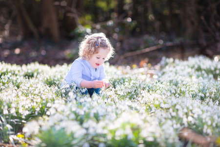 first day: Cute curly toddler girl playing with first spring flowers in a beautiful spring sunny park   Stock Photo