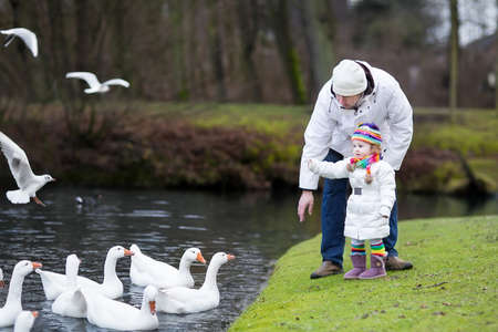 Happy young father and his adorable toddler daughter feeding white geese in a beautiful winter park with a river   photo