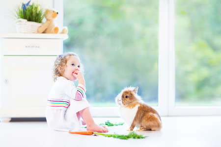 Adorable toddler girl with beautiful curly hair wearing a white dress playing with a real bunny in a sunny living room with a big garden view window sitting on the floor Stock Photo