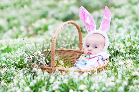 Cute little baby wearing bunny ears sitting in a basket between beautiful spring flowers during Easter egg hunt   photo