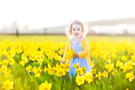 daffodil: Beautiful curly toddler girl in a blue dress playing in a field of yellow daffodil flowers on a sunny summer evening