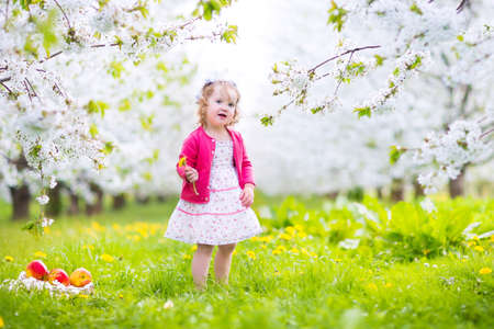 Adorable happy toddler girl with curly hair and flower crown wearing a red dress enjoying picnic in a beautiful blooming frui garden with white blossoms on apple trees eating healthy snack photo