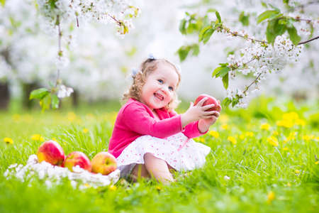 flower tree: Adorable happy toddler girl with curly hair and flower crown wearing a red dress enjoying picnic in a beautiful blooming frui garden with white blossoms on apple trees eating healthy snack