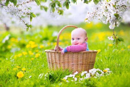 apfelbaum: Adorable glücklich lächelnden Baby Junge sitzt in einem Korb spielen in einem blühenden Frühling Apfelbaum Garten mit schönen weißen Blüten und grüne Gras mit dafodils an einem sonnigen Sommermorgen